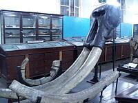 博物館で見かけた象牙